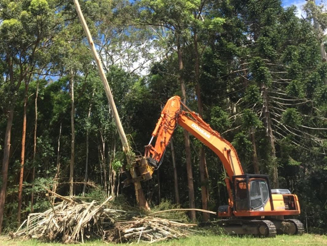 Tree Felling Removal service Sunshine Coast