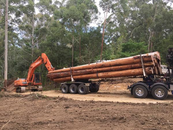 tree log removal sunshine coast