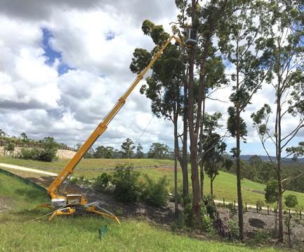 Tree Removal Sunshine Coast Gympie Hinterland
