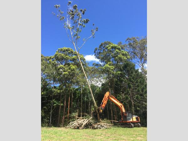 tree removal south east qld