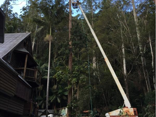 tree removal with boom lift Sunshine Coast
